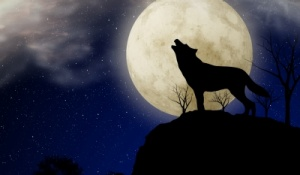 wolf howling in front of full moon.