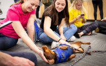 Libraries' exam week therapy dog with UB students.