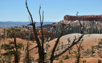 Dead tree overlooking red cliffs.